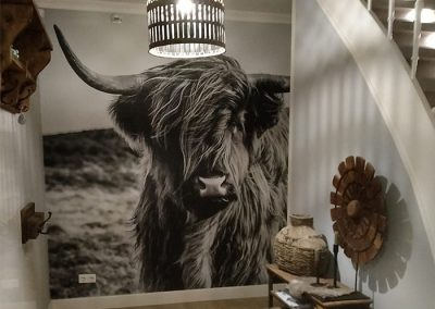 Fotobehang Highlander cow