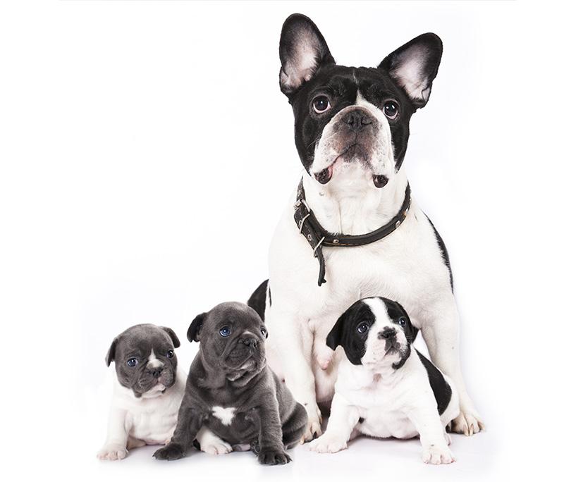 fotobehang-inzet-dogs