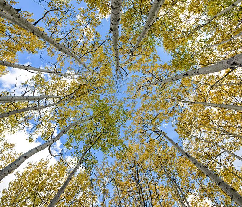 fotobehang-inzet-plafond-bomen